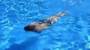 Mantener una piscina en invierno: una forma de ahorro y conciencia medioambiental