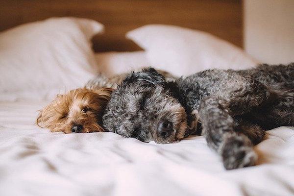 ¿Sabes cómo lograr una noche de descanso sublime?
