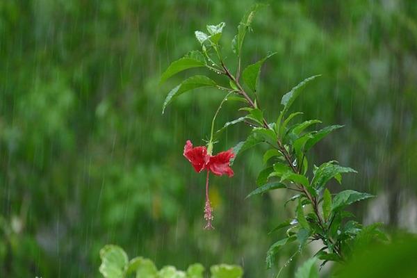 Pérgolas bioclimáticas, la solución perfecta para disfrutar del jardín todo el año